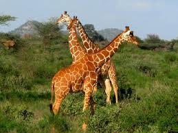 Samburu Park